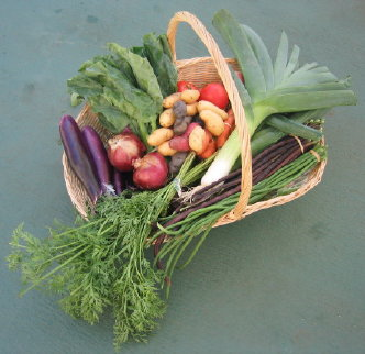 (hollywood farmer's) market day basket of cvj
